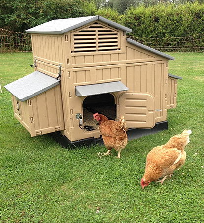 The Clever Coop Company Maintenance Free Plastic Chicken