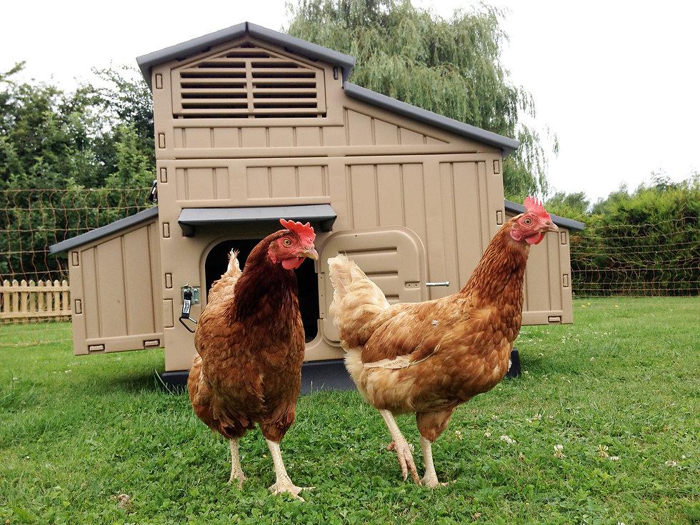 Hens with coop.jpg