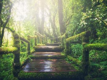 Fairy magic in ordinary life