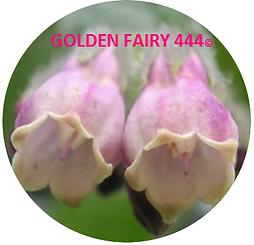 Pink flower Golden Fairy 444 Logo