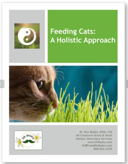 A holistic cat food recipe book soul level animal communicator feeding cats a holistic approach forumfinder Choice Image