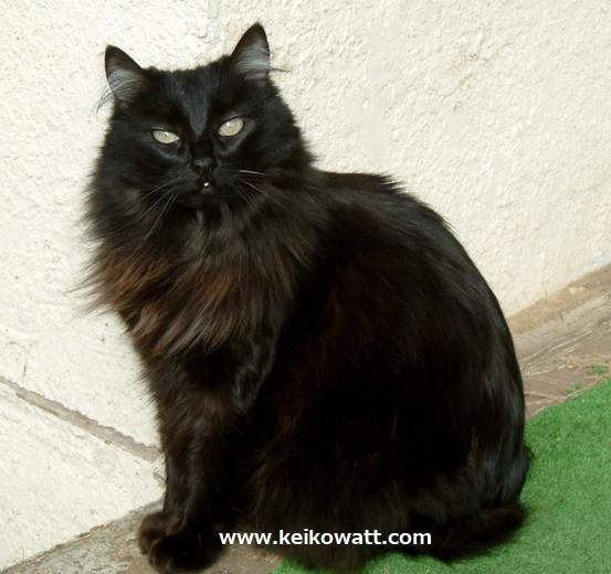 Black kitty Fluffy