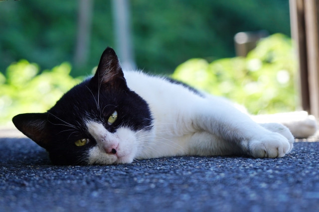 Black and white cat laying on the ground