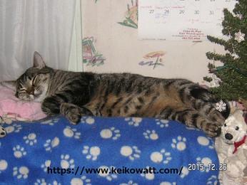 The guard cat Uriel