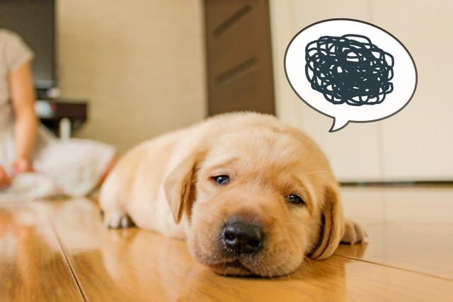 dog feeling not good