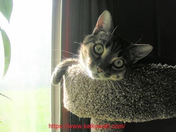 Tabby cat in kitty tower