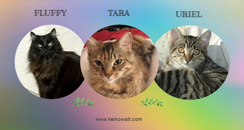 Black, Brown tabby and gray tabby cats in circles