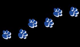Walking Panther Paws.png