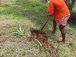 pachi plantation.jpg