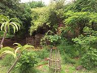 Cap Diégo Reboisement Pépinière