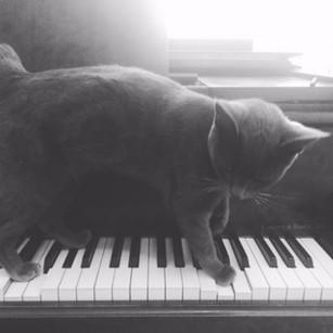 Blu on piano copy 2.JPG