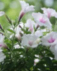 flowers-4497847_960_720.jpg
