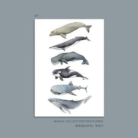 whale-001.jpg