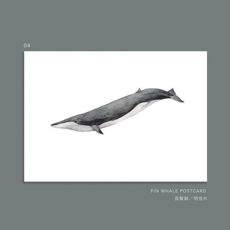 whale-004.jpg
