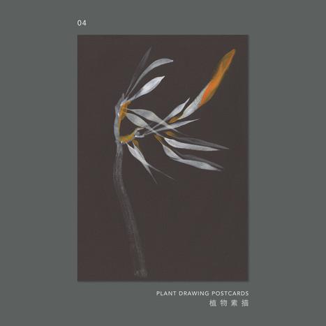 plantdrawing-postcard-04.jpg