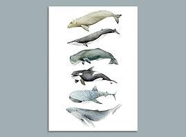 whale-20190807-005.jpg