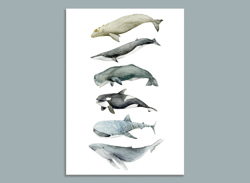 whale colletion