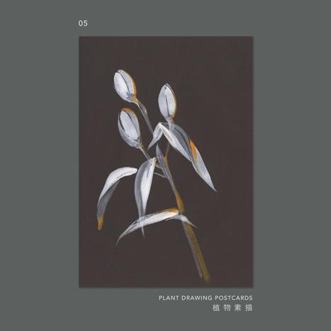 plantdrawing-postcard-05.jpg