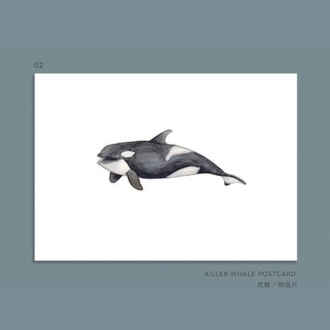 whale-002.jpg