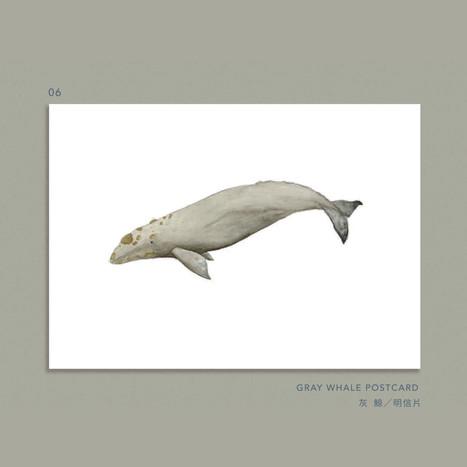 whale-006.jpg