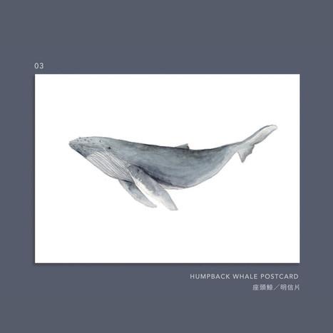 whale-003.jpg