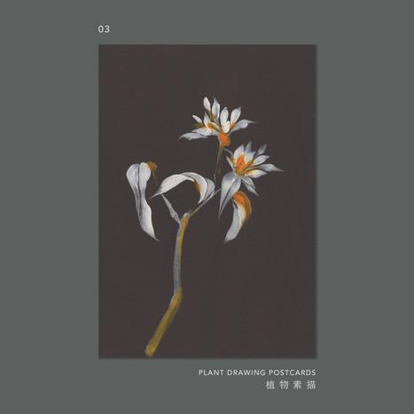plantdrawing-postcard-03.jpg