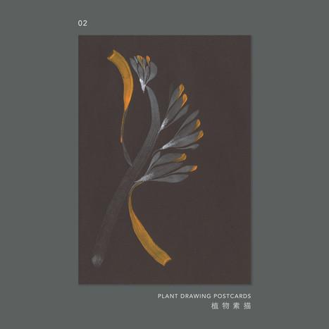 plantdrawing-postcard-02.jpg