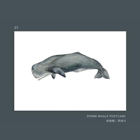 whale-007.jpg