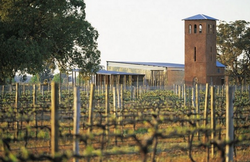 Vineyard and Tower in Spring