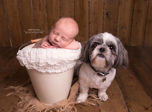 Noah: Newborn Photoshoot