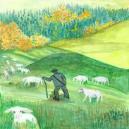 Savci  – ovečky