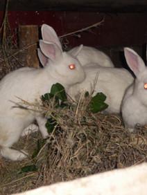 Rabbit project