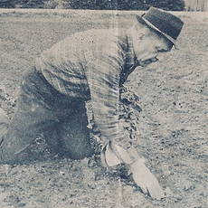 Pa C planting onions by hand-old newspaper clipping from the 80s.