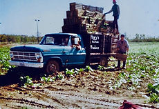 Loading crates of greens back in the 70s
