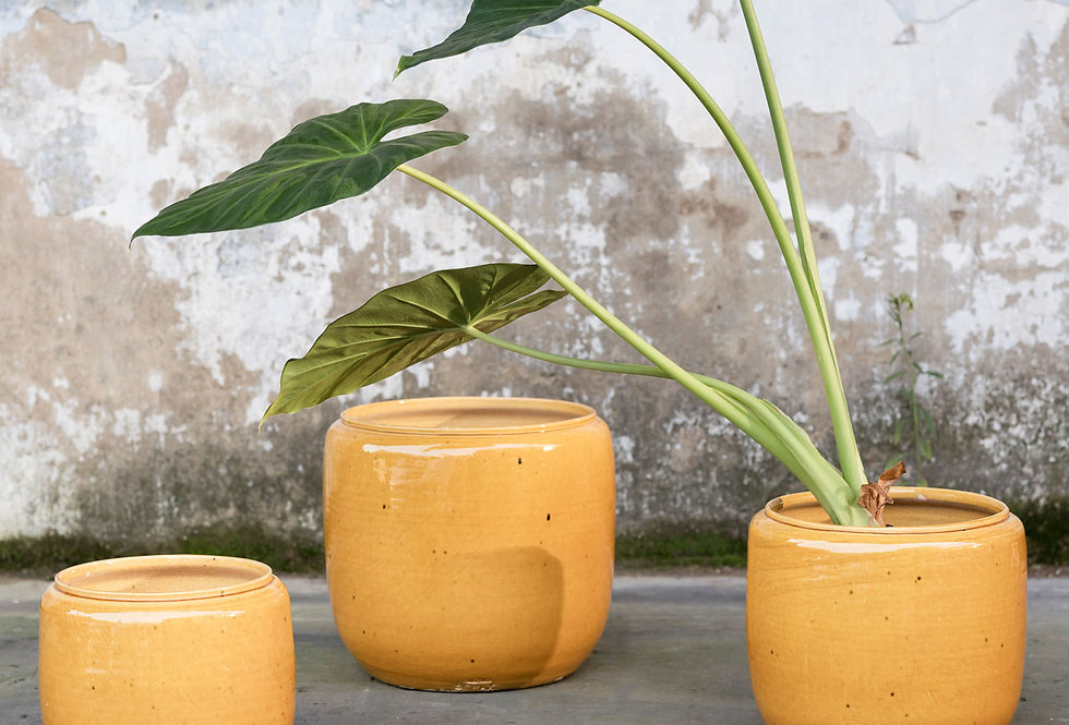 vaso COSTA Honey