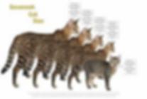 cat diagram.png
