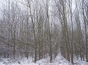terrain plantation Qb 2005.JPG