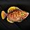 Thumbnail: Pinkish Fish Plate