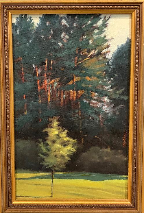 Pines and Morning Sun | Yellow Creek, PA