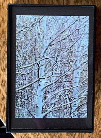 Aspens Small Framed Photo