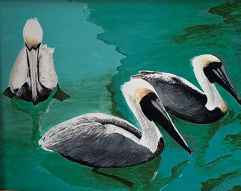 Pelicans in Key West