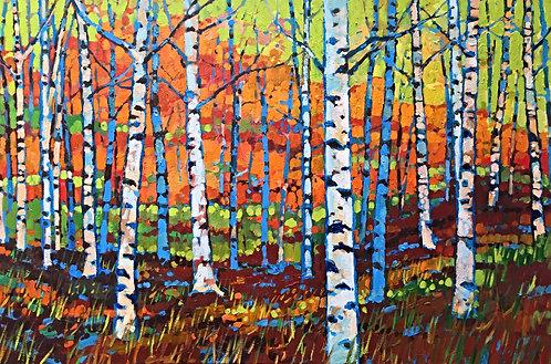 Autumn Birches (LEVITY)