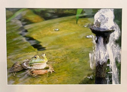 Pond Meditation (PRINT)