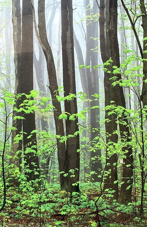 Foggy Greens (Metal Print)