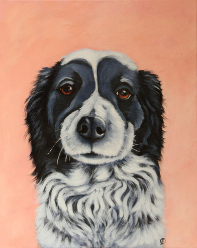 BORDER COLLIE WITH PEACHY BACKGROUND