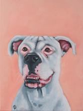 AMERICAN BULL DOG IN SOFT PEACHY PINK