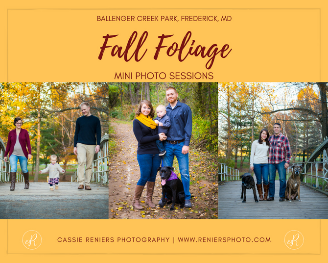 Fall Foliage Mini Photo Sessions: Ballenger Creek Park in Frederick, MD