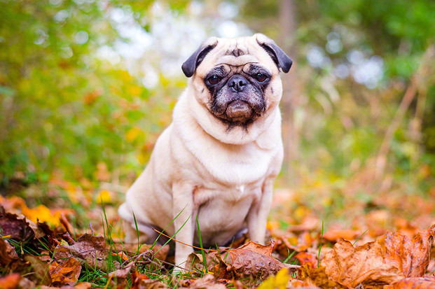 Dog photography Frederick, MD