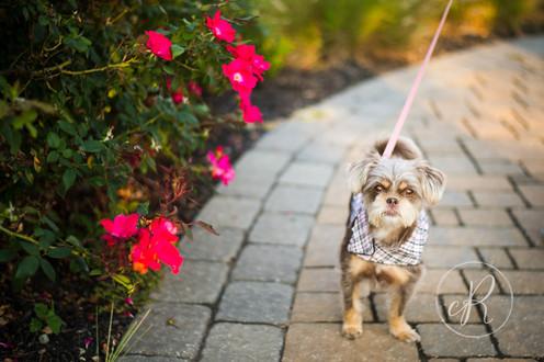 Frederick, MD Dog Photographer