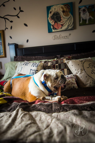 Dog photographer Frederick, MD